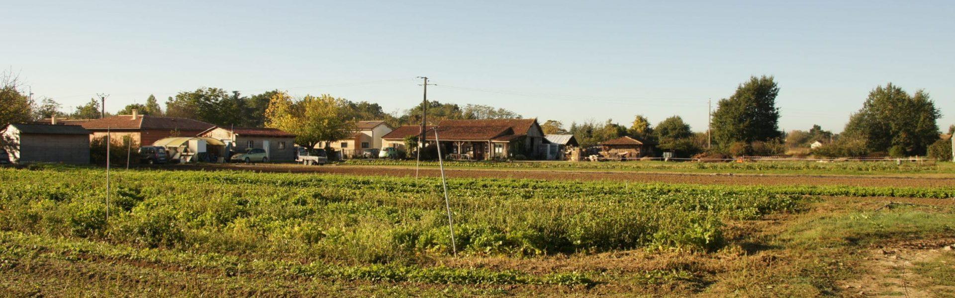 Photo du jardin vu depuis les serres